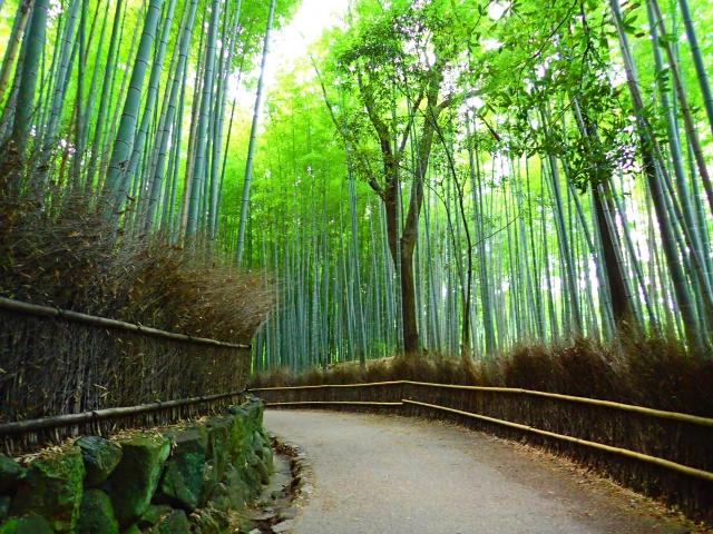 竹林の道(小径)
