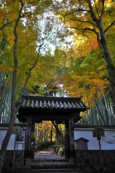 竹の寺地蔵院
