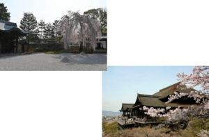 高台寺から清水寺